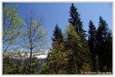 Guillaume Vergoz • La Forêt qui cache la Montagne?