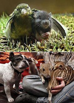 Segundo a autora, em alguns casos o comportamento dos animais pode ser explicado pelos benefícios que eles ganham com a companhia de espécies diferentes.