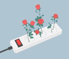 Roses by Sasha Katz