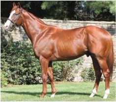 Coolmore's stud, Munnings