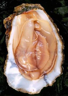 Oyster - The sacred feminine appears in many things all around us. It's easy to see why oysters are considered an aphrodisiac!