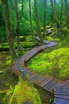 Mosey through moss magic...    www.liberatingdivineconsciousness.com