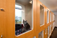 Individual cat suites - Photo gallery: Veterinary housing solutions to show cats and dogs the love - dvm360