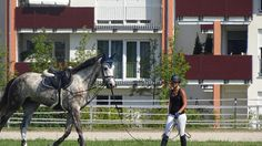 Springturnier Straubing 28.08.16