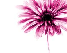 Gerber daisy speed painting by Wonderlies on DeviantArt Watercolor Daisy Tattoo, Gerbera Daisy Tattoo, Watercolor Art, Daisy Flower Tattoos, Exotic Flowers, Beautiful Flowers, Daisy Wallpaper, Environment Painting, Daisy Painting