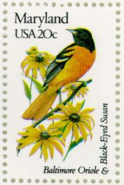 The Baltimore Oriole and the Maryland state flower- the Black-eyed Susan!