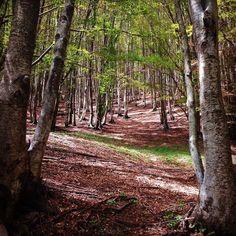 Tra elfi e folletti nel bosco incantato del Fatonero #mountains #hiking #nature #wood #tree #trekking #forest #leaves #alpiapuane #apuane #elf #fatonero by orisimone