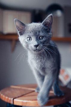 Such a darling little bundle of smoke grey fur