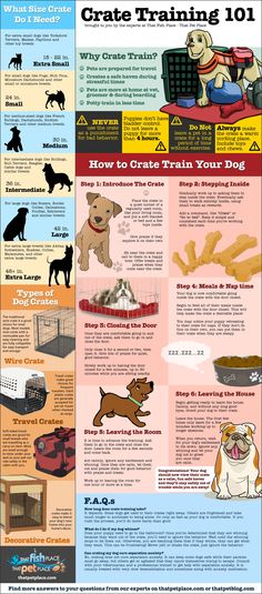 Crate Training 101. An Infographic.