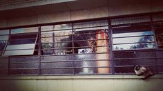 #cat #street #photography #streetphotography #teusaquillo #bogota #gato #tagsforlike