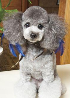 ロイヤル Dog, --愛犬の友 ヘアスタイルカタログ--