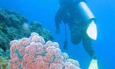 Vomo Fijian Resort, Scuba Diving.
