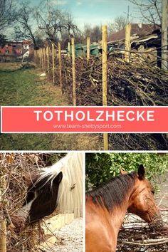 Die Ponys sind in den neuen Stall eingezogen und die Totholzhecke kommt super bei ihnen an. Alles wichtige rund um die Totholzhecke gibt es auf unserem Blog