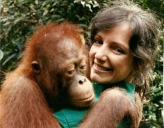 Birutė Marija Filomena Galdikas, OC (born 10 May 1946), Canadian anthropologist, primatologist, conservationist, ethologist, and author, known as the world's foremost expert on orangutans. She is currently a Professor at Simon Fraser University where she specializes in studies of primate behavior, ecology, and evolution, with a particular focus on orangutans. Well known in the field of modern primatology,  Prior to her field study scientists knew little about the species.