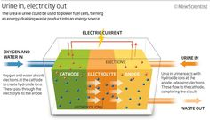 electricity and urine