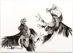 For Sale on - Cockfight, Archival Paper, Charcoal, Graphite by Emily Roz. Rooster Tattoo, Rooster Art, Bird Drawings, Animal Drawings, Hahn Tattoo, Arte Do Galo, Black And Grey Rose Tattoo, Card Tattoo Designs, Fighting Drawing
