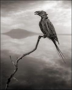 真實的冥河!坦尚尼亞「石化湖」(Lake Natron)