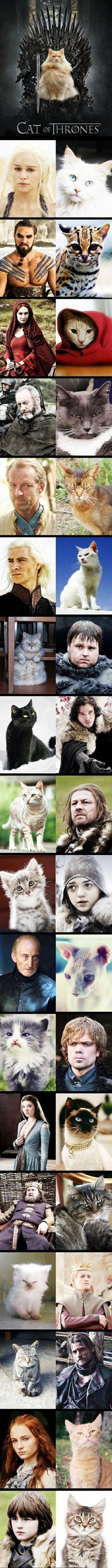 Cat of thrones :D