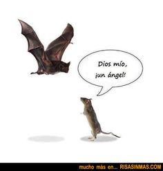 Ratón asombrado   Risa Sin Más