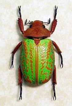 Jewel Scarab Rare Beetle Green Orange by REALBUTTERFLYGIFTS, $99.99