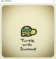 Your big tortoise is a source of pleasure to you. You bought the turtle so you can have more fun with family members and friends. Sweet Turtles, Cute Turtles, Baby Turtles, Cute Turtle Drawings, Easy Drawings, Animal Drawings, Turtle Rock, Tiny Turtle, Sheldon The Tiny Dinosaur