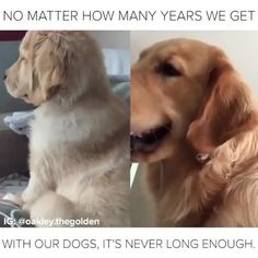 Image of: Funniest Buzzfeed Animals Pinterest 223 Best Dogs Images Buzzfeed Animals Cute Dogs Dog Lovers