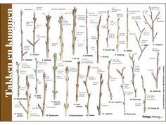 Flora Garden, Garden Plants, Nature Journal, Edible Plants, About Me Blog, Outdoor, Scouting, Teaching Kids, School