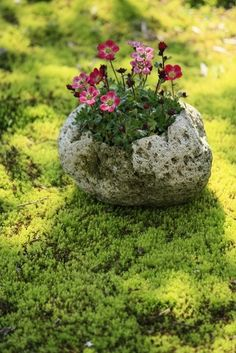 Love the sedum and then the rock as a planter. Great colors.