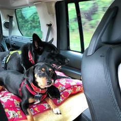 Voltando pra casa #travellingdogs