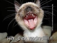 Hey, c'est vendrediiiii !! #vendredi chat humour drole bon vendredi humour