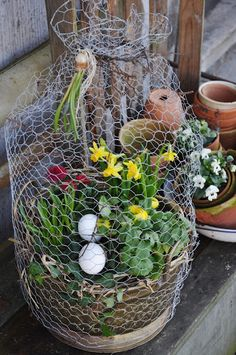 I may have to do this, to keep my banty hens out of the planters.  They do love their dust baths!  chicken wire cloche spring planter