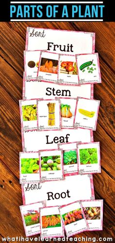 A second-grade science station about parts of a plant: fruit, stem, leaf, root. This interactive elementary science activity is perfect for second graders who need to learn about the parts of a plant! Science Lessons, Science Activities, Life Science, Leadership Activities, Group Activities, Teacher Resources, Second Grade Science, Teaching Second Grade, Elementary Science