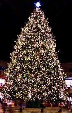 Fanuiel Hall tree #boston