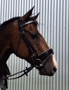 Full size bridle with patent leather nose and with white padding, custom made Browband with Swarovski Crystal and pearls. For more information go to www.blingyourgg.com