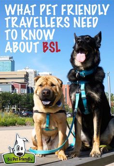 Breed-Specific Laws vary greatly by jurisdiction and restricted breeds include Akitas, American Bulldogs, Chows, German Shepherds, Huskies, Mastiffs, Rhodesian Ridgebacks, Rottweilers, Shar-Pei, and more than 100 other breeds of dog. Know before go - is your travel destination really that pet friendly??