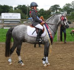 Rotherwood Signature Welsh Section B Pony and Cob stallion at stud