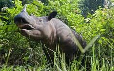 1The last known rhinoceroses in Mozambique have been wiped out by poachers apparently working in cahoots with the game rangers responsible for protecting them, it has emerged. The 15 threatened animals were shot dead for their horns last month in the Mozambican part of Great Limpopo Transfrontier Park, which also covers South Africa and Zimbabwe. &...