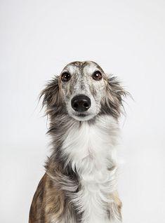 My Sweet Penelope Pup | Wildflower's Jewel the Unicorn | Flickr