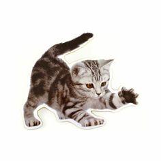 Wandbild Kätzchen - Fräulein Gelb! Cats, Animals, Wall Murals, Yellow, Amazing, Gatos, Kitty Cats, Animaux, Animal