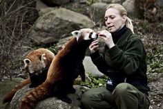 I want her job! Hedgehogs, Brown Bear, Otters, Cute Baby Animals, Foxes, Pretty Boys, Nepal, Lions, Cute Babies