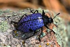 colorful insects - Google Search