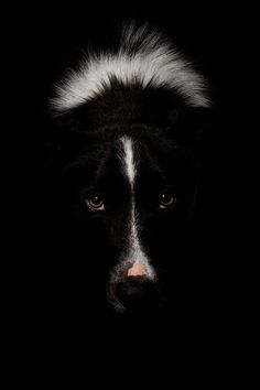 """Click visit site and Check out Best """"Border Collie"""" T-shirts. This website is excellent. Tip: You can search """"your name"""" or """"your favorite shirts"""" at search bar on the top."""