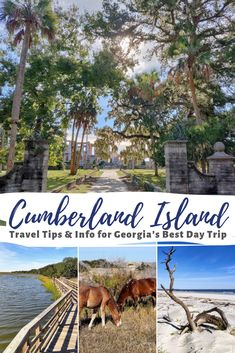 Cumberland Island National Seashore is an island off the coast of Georgia boasting pristine natural beaches, famous wild horses, and storied history! If you find yourself in the US South, Cumberland Island is so well worth a day-long detour off Oh The Places You'll Go, Places To Travel, Places To Visit, Cumberland Island Georgia, Travel Usa, Travel Tips, Georgia Beaches, Where To Go, Vacation Spots