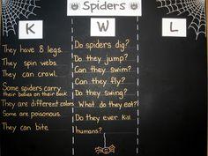 Spider KWL chart