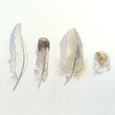 Art Painting Original Watercolor Bird Feathers 9.6 x 12.6 $69.00, via Etsy. Love the shadows.