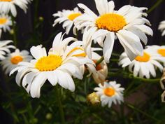 Flower photography by Kristen Juran
