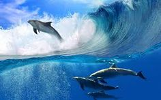 Bildergebnis für dolphins