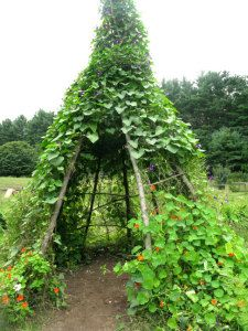 BEANS, SQUASH AND FLOWERS . . . UP HIGH !  Add some vertical oomph to your garden & give your little people (or yourself) a shady verdant hide out.