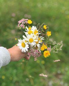 Wiesenblumen... ich