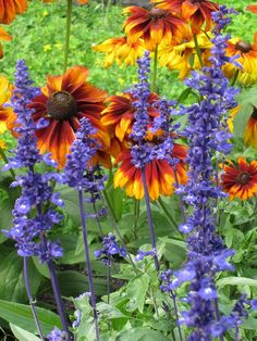 Orange and purple  (blanket flower and blue salvia?)  Lovely combo